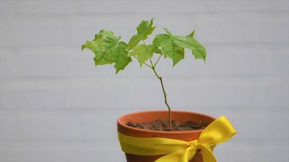 Mein Baum für Braunschweig